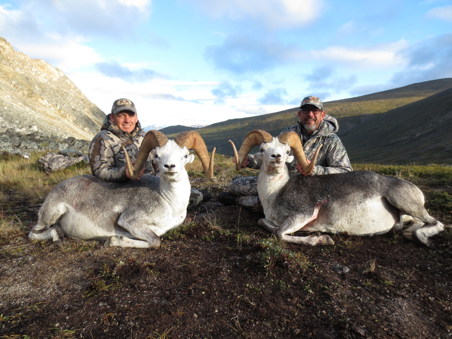 Backcountry-BC-Beyond-Bighorn-Stone-Dall-Desert-Sheep-Hunting-Outfitter355