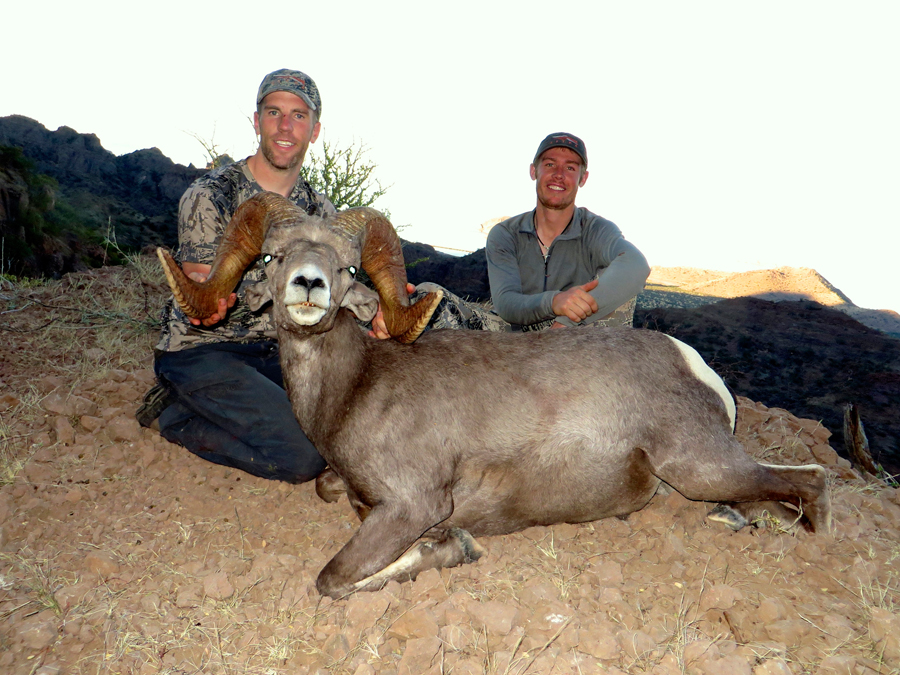 Backcountry-BC-Beyond-Bighorn-Stone-Dall-Desert-Sheep-Hunting-Outfitter366
