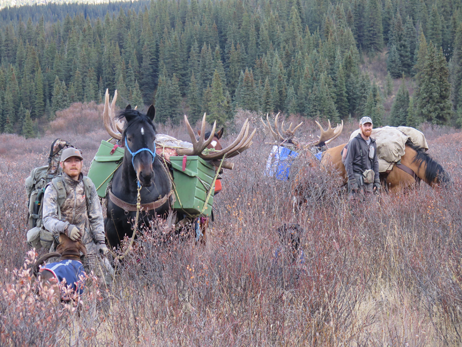 Backcountry-BC-Beyond-Moose-Outfitter-Hunting-Alaska-Canada066